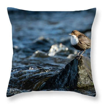 Dipper On The Rock Throw Pillow by Torbjorn Swenelius