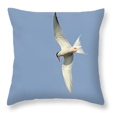 Throw Pillow featuring the photograph Dive by Tony Beck