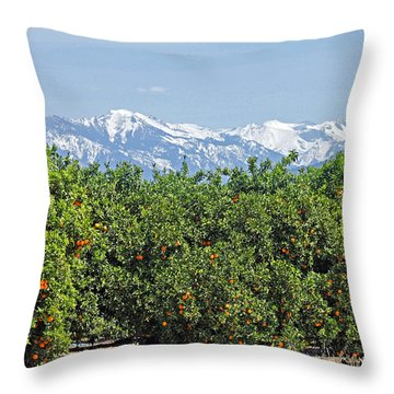 Throw Pillow featuring the photograph Dm6850-e Orange Grove And The Sierra Nevada Ca by Ed Cooper Photography