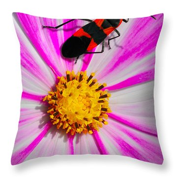 Do I Clash With This Flower? Throw Pillow