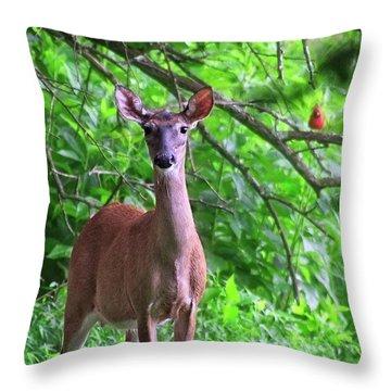 Doe And Cardinal Throw Pillow