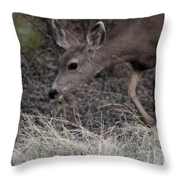 Doe Carefully Grazing In Tombstone Throw Pillow by Colleen Cornelius