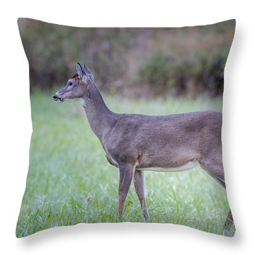 Throw Pillow featuring the photograph Doe In Cades Cove by Tyson Smith