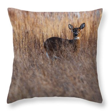 Doe In The Reeds Throw Pillow by Timothy McIntyre