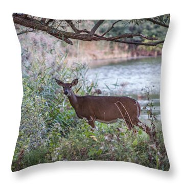 Throw Pillow featuring the photograph Doe Under Arching Branches by Chris Bordeleau