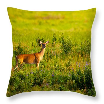 Throw Pillow featuring the photograph Whitetail Doe In Prairie Clover by Jeff Phillippi