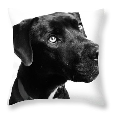 Dog Throw Pillow by Amanda Barcon