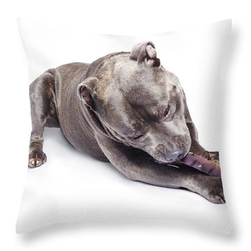 Throw Pillow featuring the photograph Dog Eating Chew Toy by Jorgo Photography - Wall Art Gallery