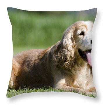 Dog Lying Down On The Green Grass Throw Pillow