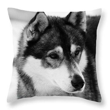 Dog - Monochrome 3 Throw Pillow