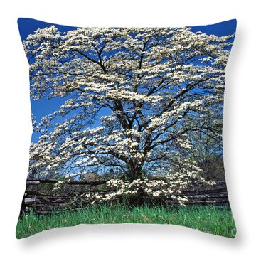 Dogwood And Rail Fence Throw Pillow by Thomas R Fletcher
