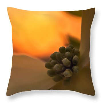 Dogwood Bloom Throw Pillow by Craig Szymanski