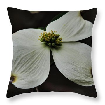 Throw Pillow featuring the photograph Dogwood Bloom Macro 002 by Lance Vaughn