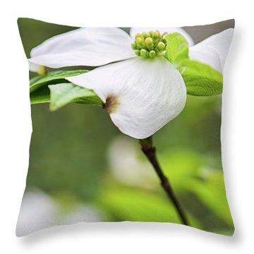 Dogwood Blossom Standing Throw Pillow