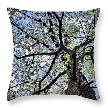 Dogwood Canopy Throw Pillow by Cricket Hackmann