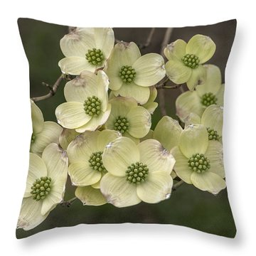 Dogwood Dance In White Throw Pillow