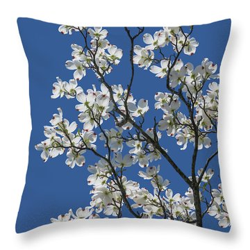 Dogwood Tree In Spring Throw Pillow