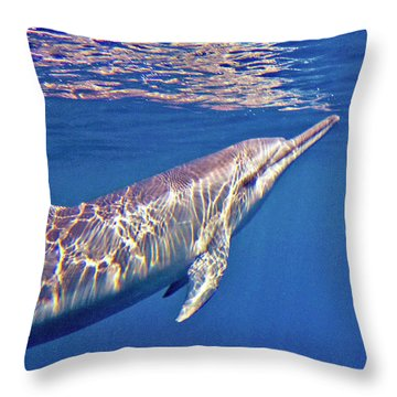 Dolphin Reflections Throw Pillow