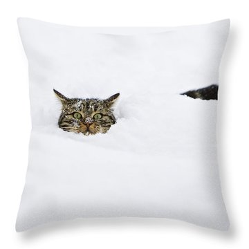 Domestic Cat Felis Catus In Deep Snow Throw Pillow