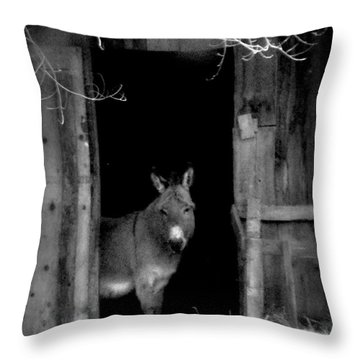 Throw Pillow featuring the painting Donkey In The Doorway by Michael Dohnalek
