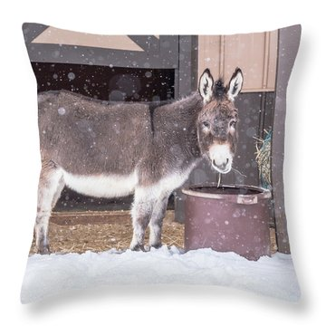 Donkey Watching It Snow Throw Pillow