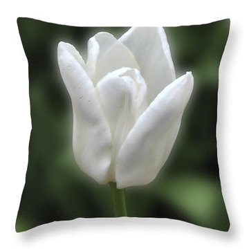 Throw Pillow featuring the photograph Friendship Tulip by Rich Stedman