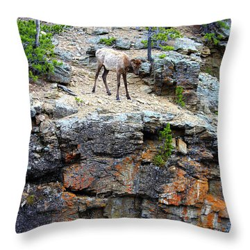 Throw Pillow featuring the photograph Don't Jump by Shane Bechler
