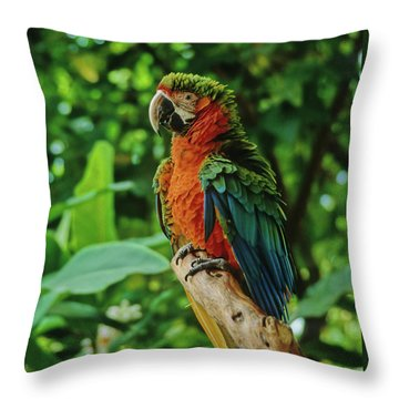 Throw Pillow featuring the photograph Don't Ruffle My Feathers by Marie Hicks