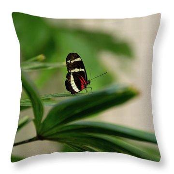 Doris Longwing Butterfly Throw Pillow