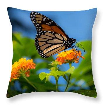 Dote Throw Pillow