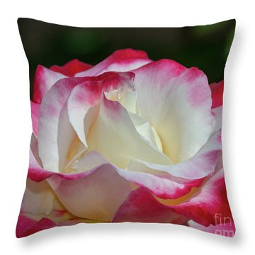 Double Delight Rose 1 Throw Pillow
