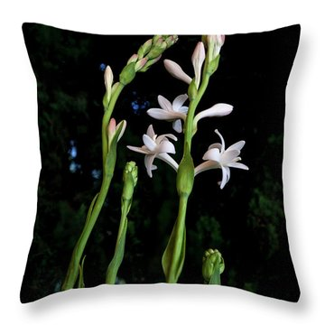 Double Tuberose In Bloom Throw Pillow