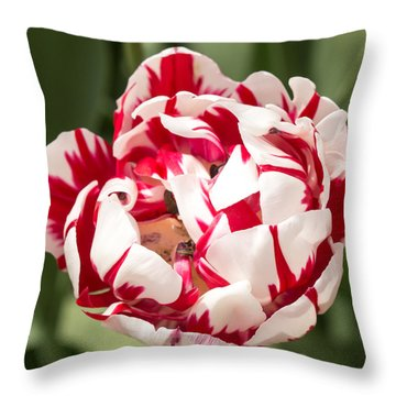 Throw Pillow featuring the photograph Double Tulip by Cathy Donohoue