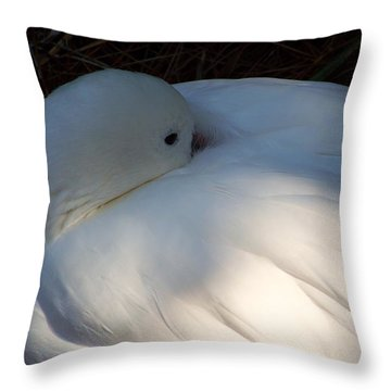 Down For A Nap Throw Pillow by Karen Wiles