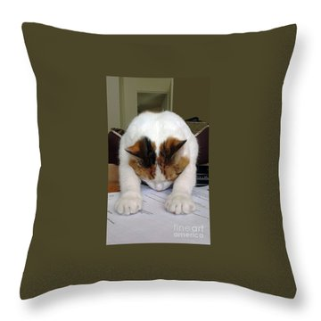 Throw Pillow featuring the photograph Downward Facing Cat  by Bill Thomson