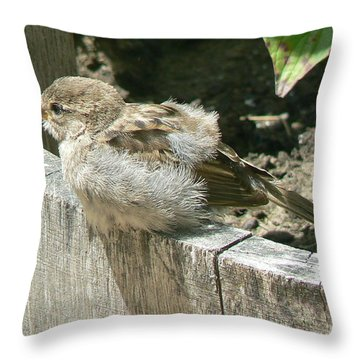 Downy Nestling Throw Pillow by Pamela Patch