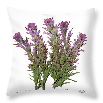 Downy Paintbrush Throw Pillow