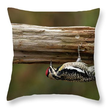 Hairy Woodpecker Throw Pillow