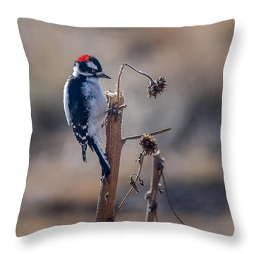 Downy Woodpecker Finding Insects From Sunflower Stem. Throw Pillow