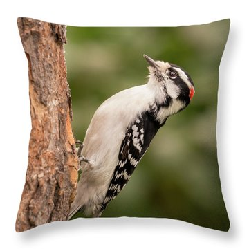 Downy Woodpecker In Minnesota Throw Pillow by Jim Hughes