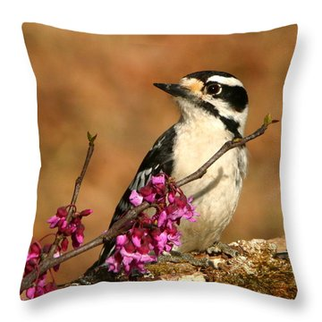 Downy Woodpecker In Spring Throw Pillow by Sheila Brown