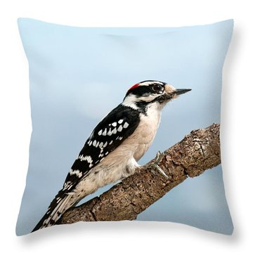 Throw Pillow featuring the photograph Downy Woodpecker Spring 2016 1 by Lara Ellis