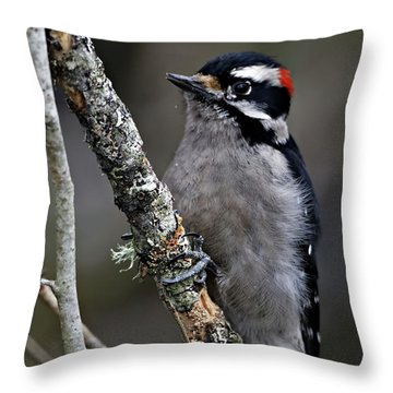 Downy Woodpecker Throw Pillow