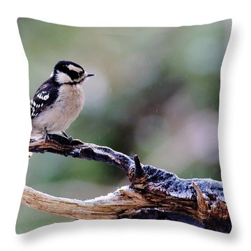 Downy Woodpecker With Snow Throw Pillow