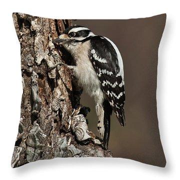 Throw Pillow featuring the photograph Downy Woodpecker's Secret Stash by Lara Ellis