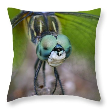 Bug-eyed Throw Pillow by Debbie Stahre