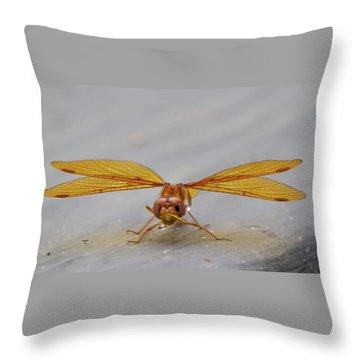 Dragon Fly Hanging Around Throw Pillow