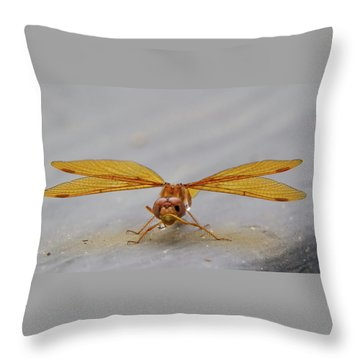 Dragon Fly Hanging Around Throw Pillow