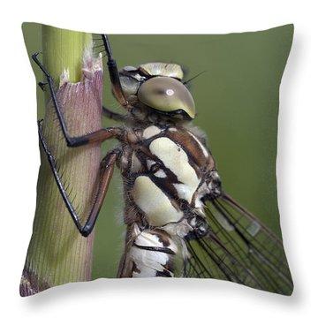Dragon Fly Throw Pillow by Michal Boubin