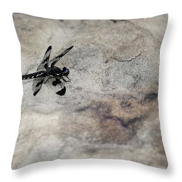 Dragonfly On Solid Ground Throw Pillow